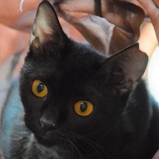 小柄で華奢な黒い天使ロゼッタです
