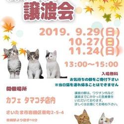 保護猫譲渡会 in タマコチ