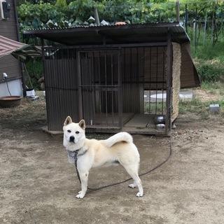 白い雑種犬