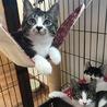 猫の里親探し ミュウの会 相模原 仔猫多数参加