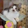 多頭飼育崩壊現場から保護した美猫のノエちゃん