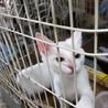 センター引き出し、真っ白美猫姉妹ももちゃん サムネイル3