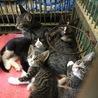 お母さん猫と一緒6匹の子猫たち