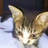 生後1ヶ月くらいのオス猫です。