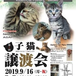 9/16子猫の譲渡会を開催します。