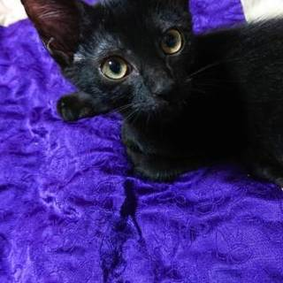 「超緊急」黒猫のスイカ