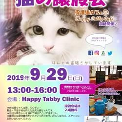 ハッピータビー猫の譲渡会(保護猫カフェ同時開催!)