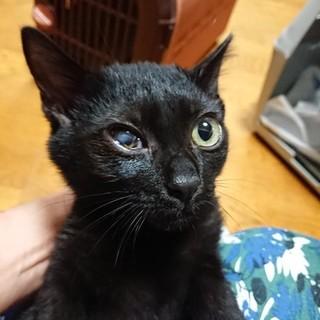おとなしい黒猫の男の子 キャメロン