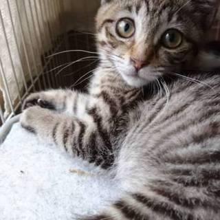 おてんばな美猫  ツンデレちゃんです