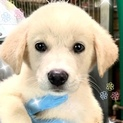 個体番号:M569 可愛い子犬