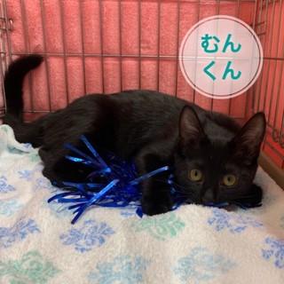 ピカピカの黒猫食いしん坊の甘えん坊ムン君