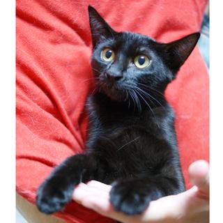 デレデレ黒猫☆漆黒の美女☆モミジちゃん