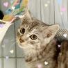 綺麗なグレー♪ミンクちゃん サムネイル2