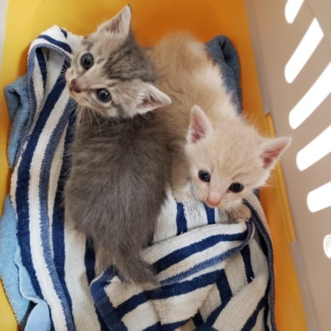 保護猫カフェfunnyCat(ファニーキャット)のカバー写真