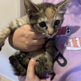 推定2ヶ月の子猫です!サビメス