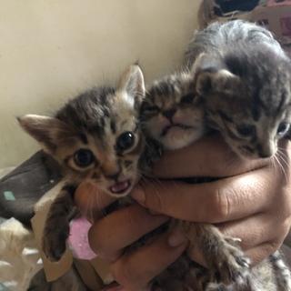 大急募!子猫3匹!