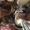 大急募!子猫3匹! サムネイル4