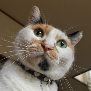 前髪がかわいい 三毛猫のモグちゃん