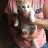 6/9生まれの兄弟猫です