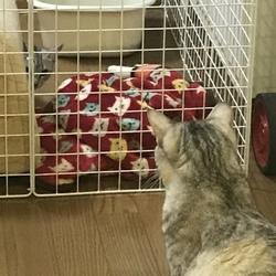 トライアル中子猫をケージから出しても大丈夫?