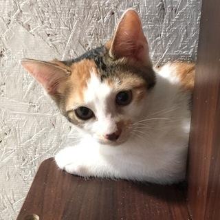 可愛い子猫1