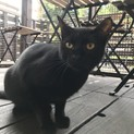チュール大好き!黒猫のつくし君☆