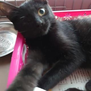 4ヶ月ぐらい 子猫 黒