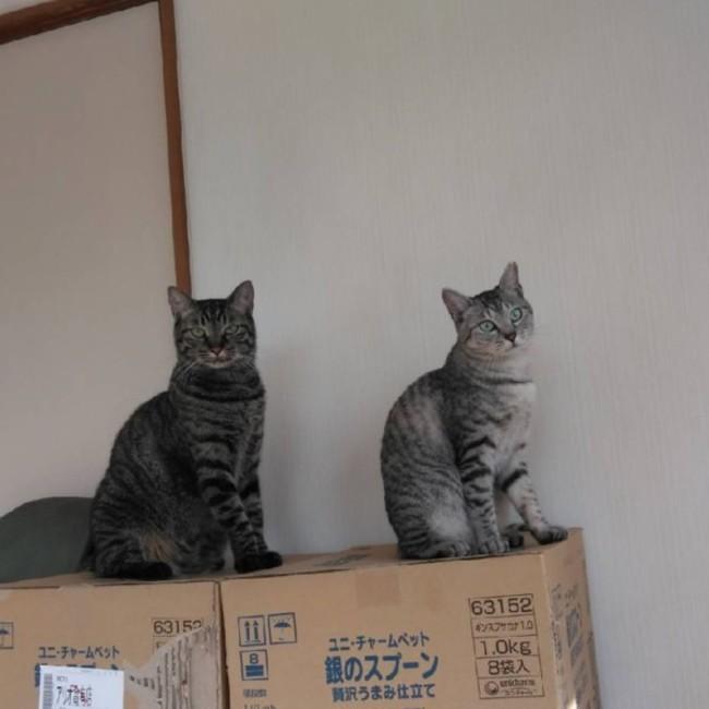 たんたん保護猫レスキュー隊のカバー写真