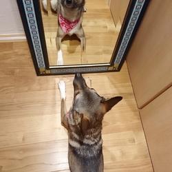 「鏡に映る自分」サムネイル1
