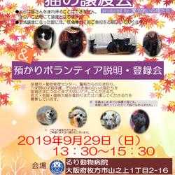 猫のミニミニ譲渡会 produced by 魔法使いの猫たち&犬猫の預かりボランティア説明・登録会