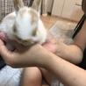 うさぎ赤ちゃん サムネイル3