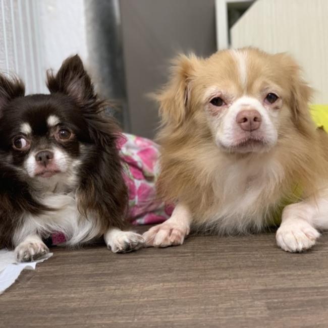 保護犬カフェ®立川店のカバー写真