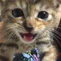 甘えん坊子猫