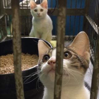 遊ぼうとアピール子猫兄弟2匹