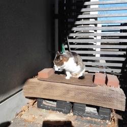 昨日の猫ボランティア活動