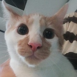 9月23日に愛知県豊橋市で犬猫の譲渡会 サムネイル3