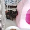 ウチに迷い込んできた子猫 3ヶ月くらい