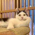 <9/15日里親会参加>山手の愛され猫、みかん