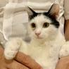 <9/15日里親会参加>山手の愛され猫、みかん サムネイル2