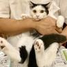 <9/15日里親会参加>山手の愛され猫、みかん サムネイル3