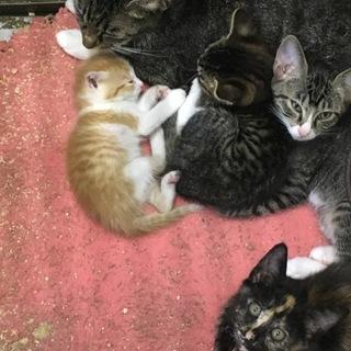 ママ猫ではない猫に甘える  小さな子猫!動画あり