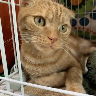 保護猫スコくん 可愛いすぎるんです♡
