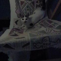 「猫用ハンモック」サムネイル1