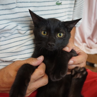 留守番可・人懐こい黒猫ヤマトくん、医療済