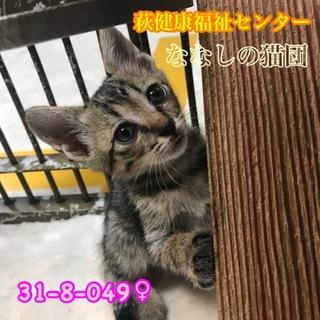 可愛いキジトラ子猫 049 兄妹で収容