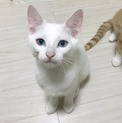 ビビリだけどイタズラ大好きな白猫男子【ひすい】