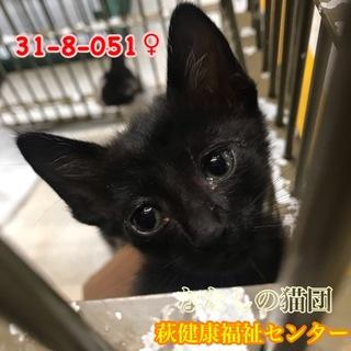 可愛い黒子猫ちゃん♀051 兄妹で収容