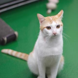 譲渡対象猫のご紹介です♪