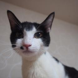 猫のはこぶね里親会&自動販売機募金 サムネイル1