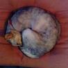 灰色の猫 さん